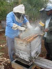 Chiapas Collective Beekeepers