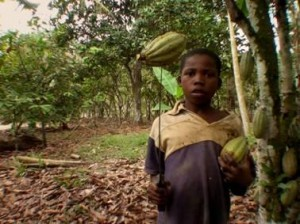 Child Laboring in Cocoa Fields