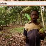 Child Laboring in Cocoa Fields