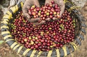 Why Now Is the Time to Start Drinking Fair Trade Coffee