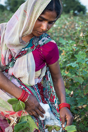 Transforming the textile industry with Fairtrade cotton